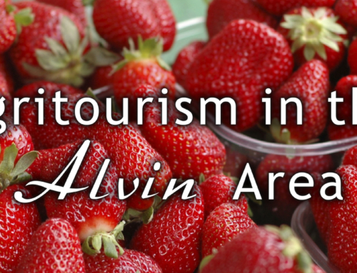 Agritourism in the Alvin Area