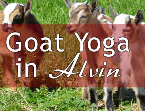 Original Goat Yoga Location in Alvin